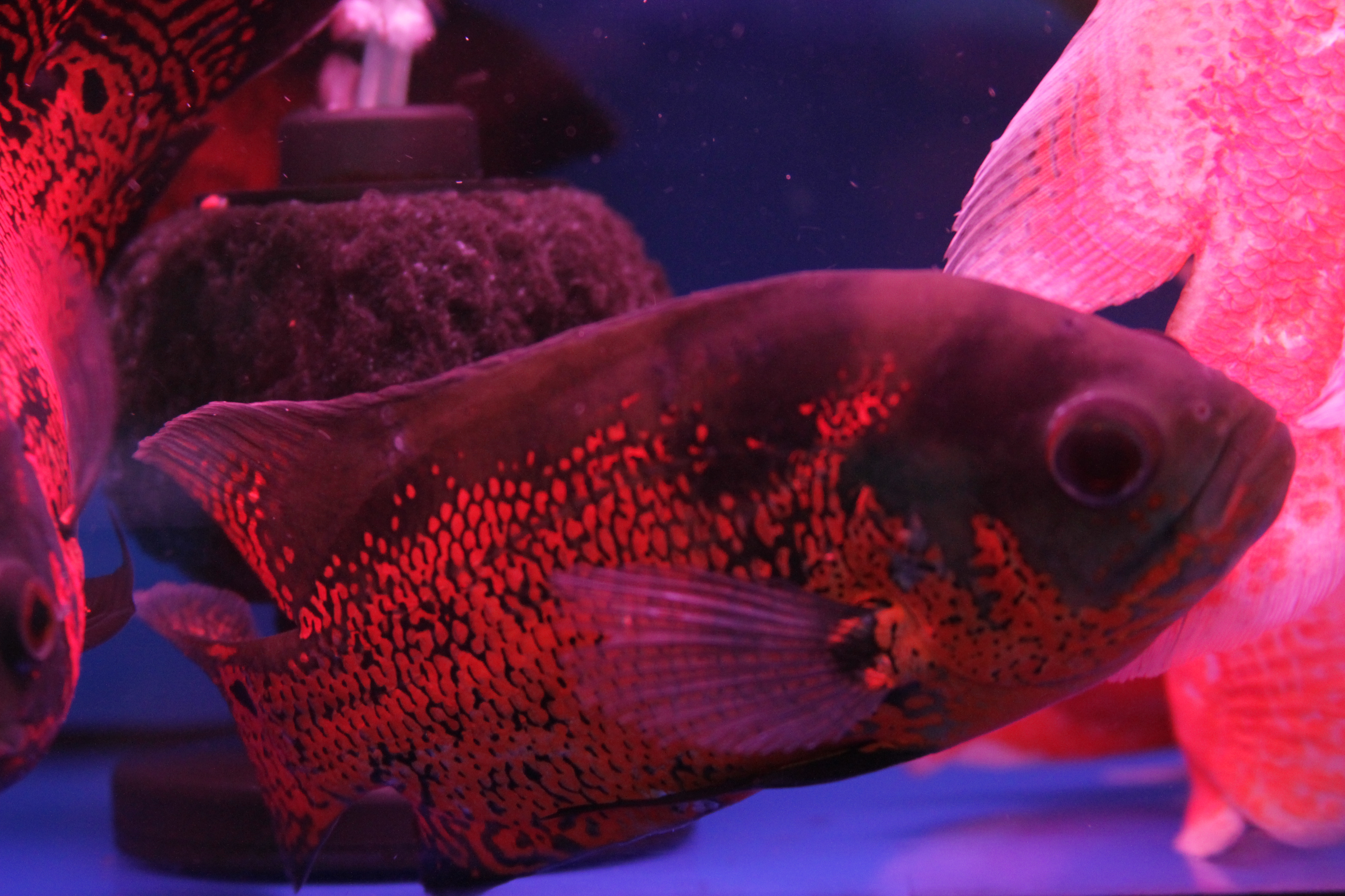 Pet Fish Market | Ruben Teno\'s Blog